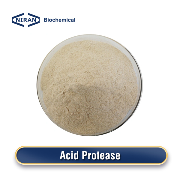 Acid Protease Enzyme Powder